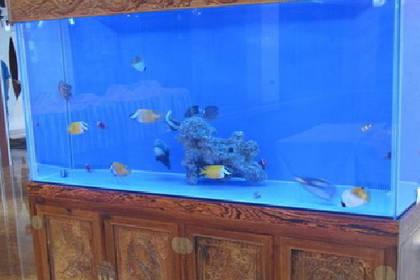 您的满意我们永恒的追求,青岛大型鱼缸制作安装