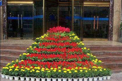 罗湖区花卉绿植租摆,品质优,植物活力有生机