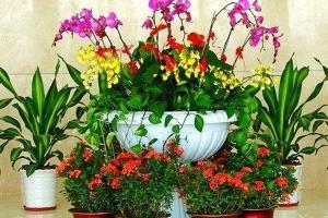 盐田区花卉租赁,为您创造高品位的绿色环境,值得信赖