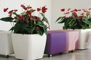 福田区完美的花卉租赁,还您一个清新优雅的工作环境