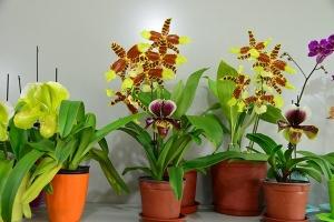 深圳满江南花卉租赁,您的不二之选,大品牌可信赖