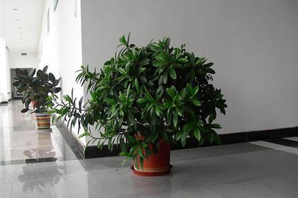 深圳花卉租赁就找满江南,可根据装修风格设计租摆方案