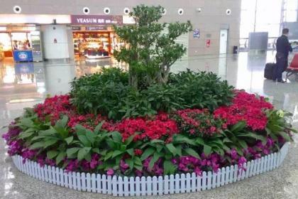 花卉盆景租摆