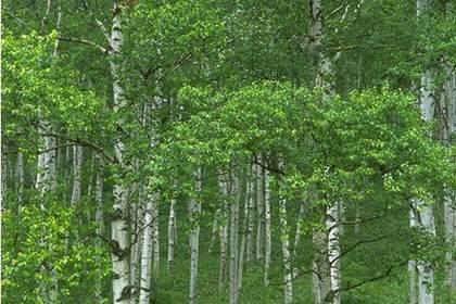 兰州苗木销售,品种齐全