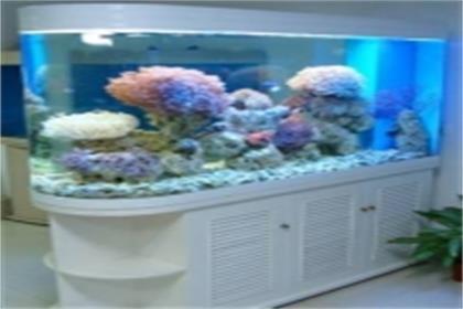 定做墙壁鱼缸的步骤以及尺寸介绍