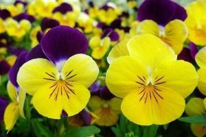 福田区花卉租赁