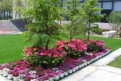 罗湖区花卉租赁公司