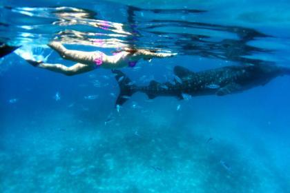 提供各种潜水培训课程