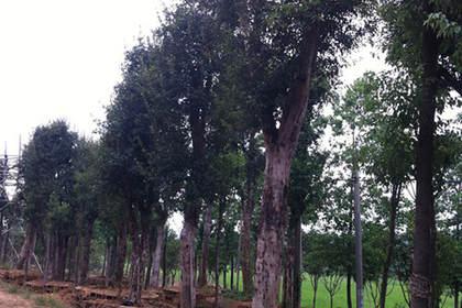 长沙苗木培育