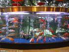 广州鱼缸定做