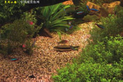 广州海鲜鱼池定做