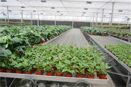 草莓立体种植槽