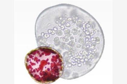 植物干细胞平台型技术