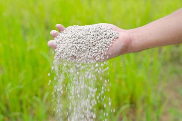 肥料氮含量仅为1%,假化肥致77户农民玉米减产!