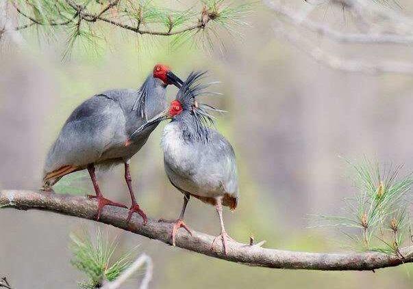 秦岭野生动植物数量不断增长 国家公园建设助力珍稀生物保护