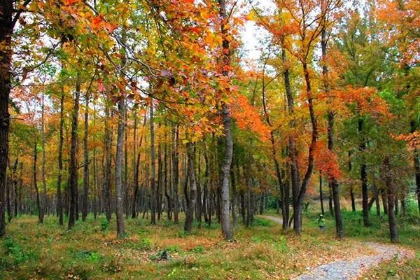 这些树种价格持续增长,苗木市场越发热闹