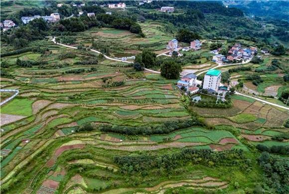 """巴南:发展特色产业种植花卉苗木 种出""""致富路"""""""