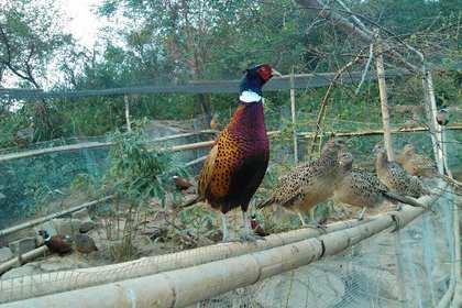 广州鸡苗孵化场