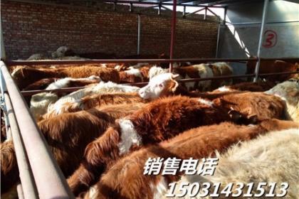 牛羊产品生产加工