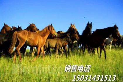 张北肉牛养殖场