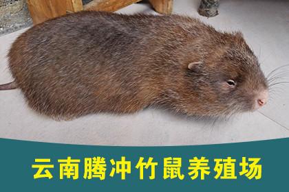 九江干蜈蚣批发
