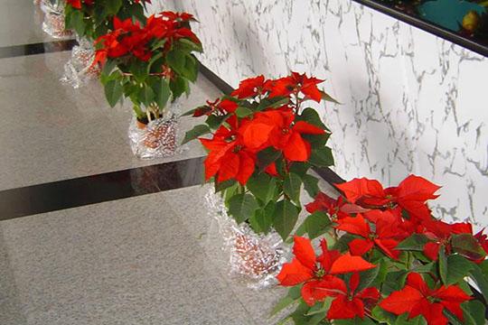 宝安区花卉公司