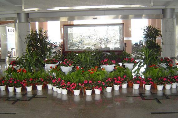 南山区绿植公司