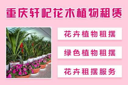 武汉园林苗木销售
