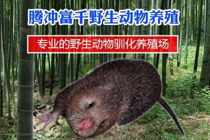 山东肉兔养殖场