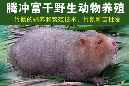 九江蜈蚣种苗销售