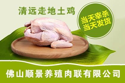安陆七彩山鸡销售