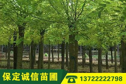 武汉盆景花卉出租