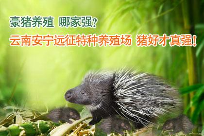 宜昌野兔养殖场