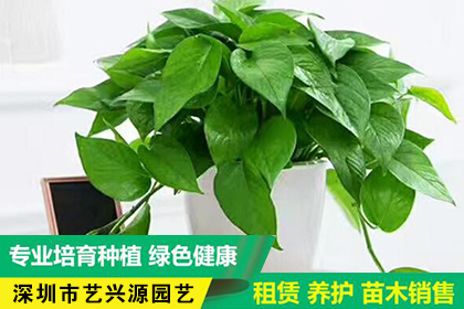 深圳花卉租赁