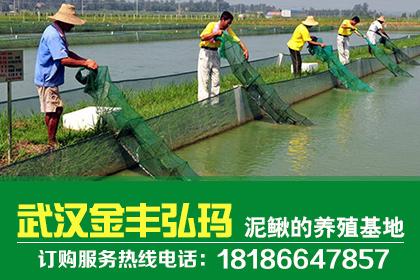 九江蜈蚣养殖基地