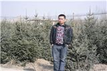 西北苗木绿化