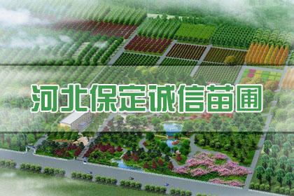 武汉盆栽花卉出租