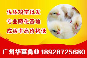 宜昌黑鸡种植