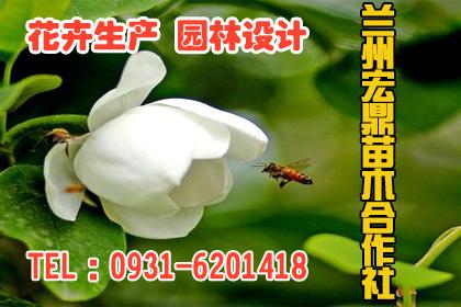 咸宁桂花树苗供应