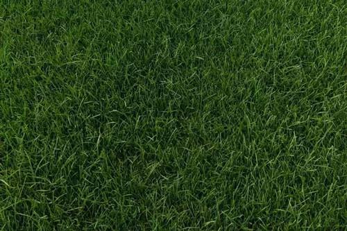 河北草坪多少一平方