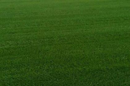 辽阳绿化草坪