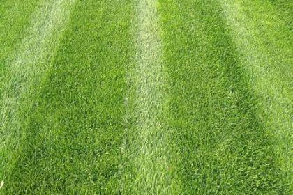 辽阳草坪种植