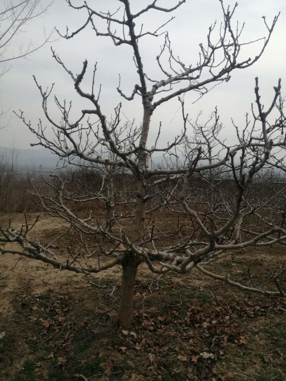 山楂树20.jpg