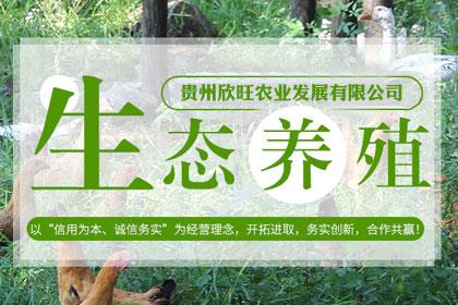 宜昌鸡苗养殖