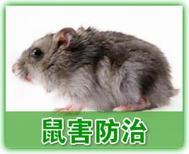 白云区灭白蚁灭鼠