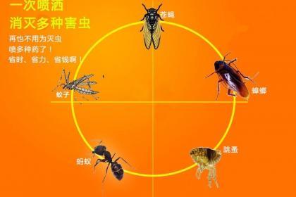 佛山南海区白蚁防治