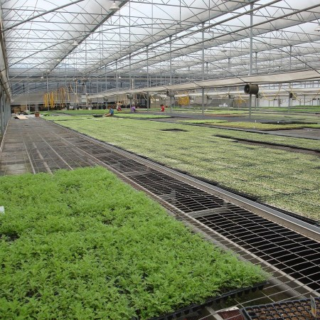 温室蔬菜育苗苗床.jpg