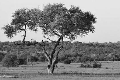 恢复陆地生态系统:碳减排新路径