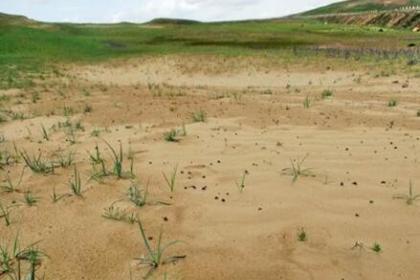 """甘肃修复黄河""""首曲""""生态:有效遏制草原沙化、荒漠化"""