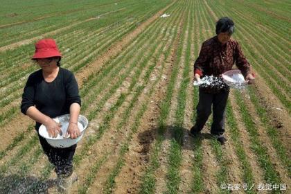 小麦追肥用尿素好吗?